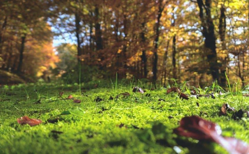 foto de gramado com folhas que precisam ser recolhidas.