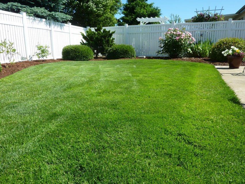 Imagem mostra uma área ampla de grama sem obstáculos no meio do gramado, apenas alguns arbustos ao fundo.