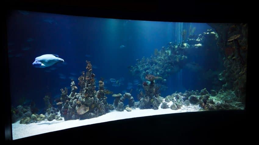 Imagem de um aquário curvado.