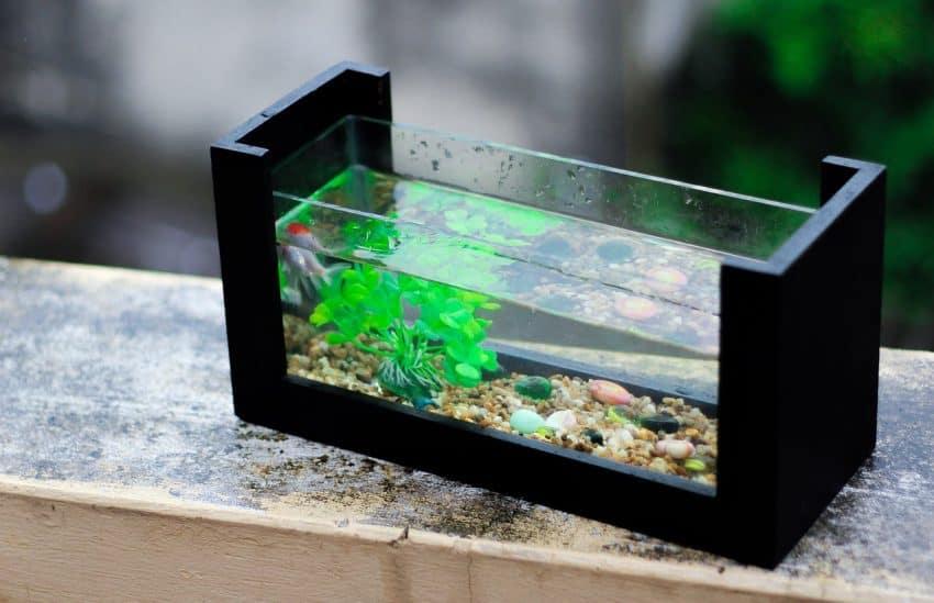 Imagem de um aquário pequeno.