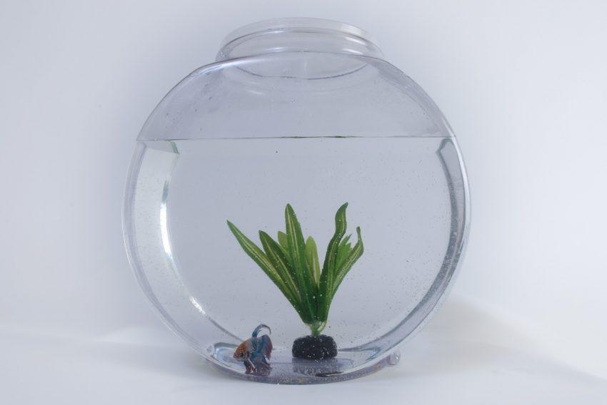 Imagem de um aquário redondo pequeno.