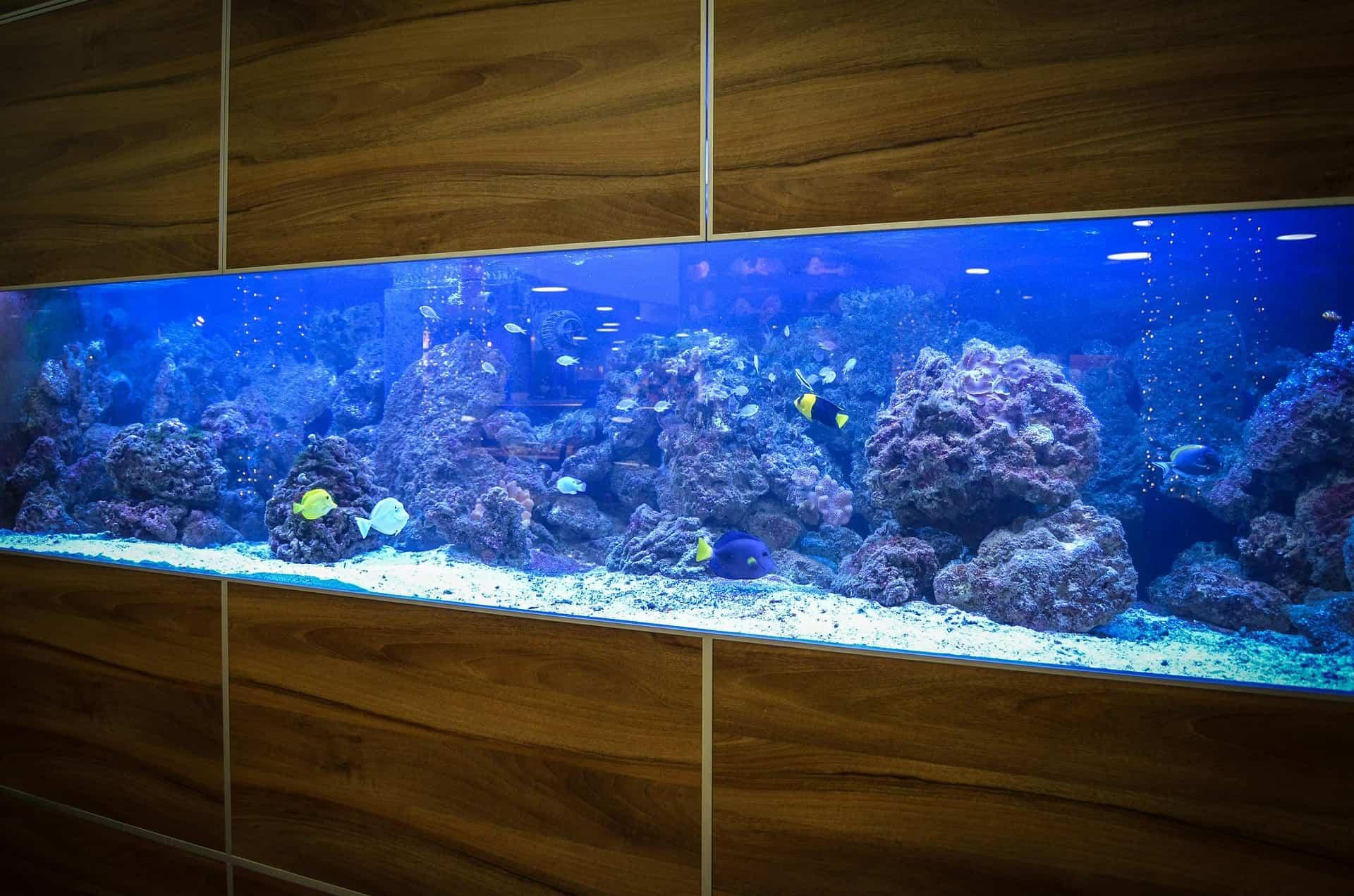 Imagem de um aquário grande com pequenos peixes.