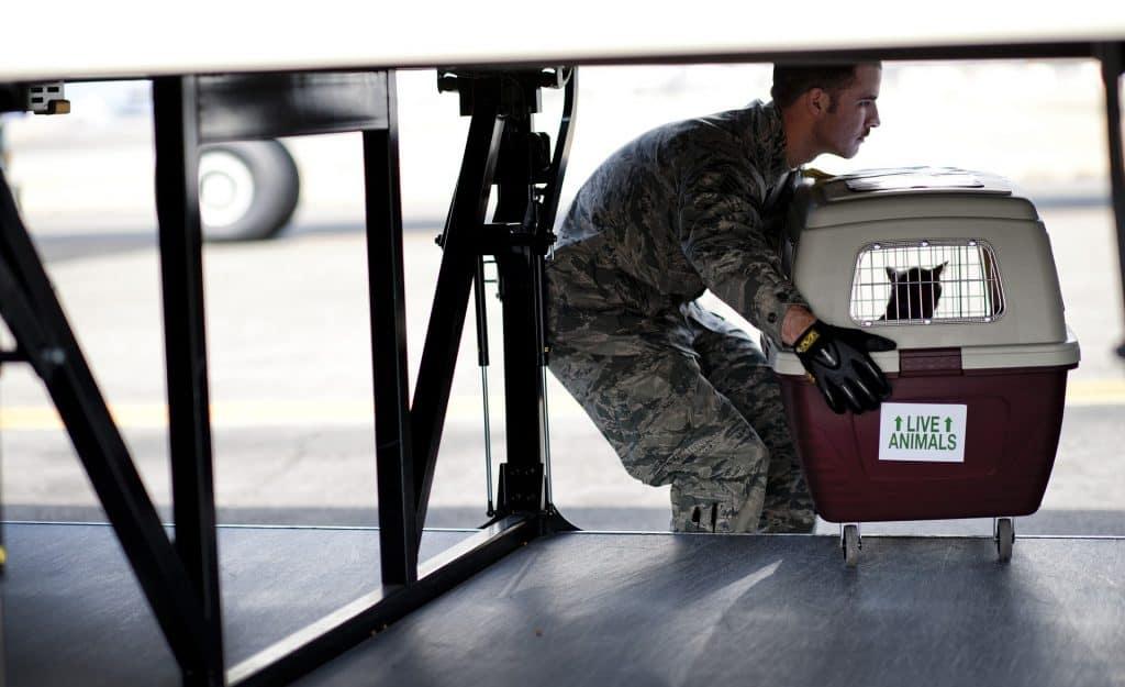 Homem colocando caixa de transporte com gato dentro em avião