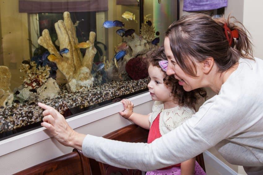 Mãe e filha observando os peixes no aquário.