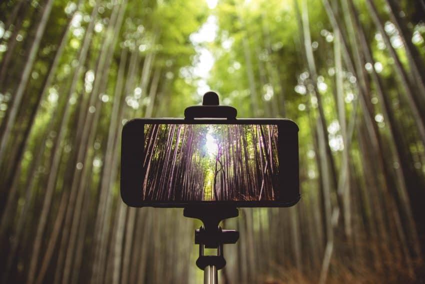 Imagem de um celular preso em um pau de selfie, com bambus ao fundo.