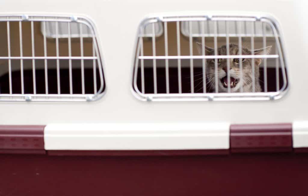 Imagem mostra gato através das aberturas de ventilação da caixa de transporte