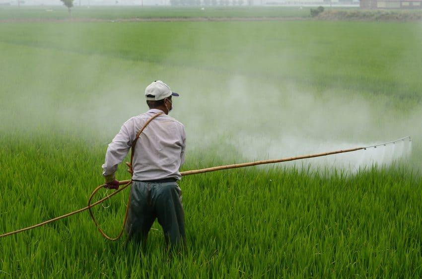 Arrozal sendo pulverizado por agricultor.