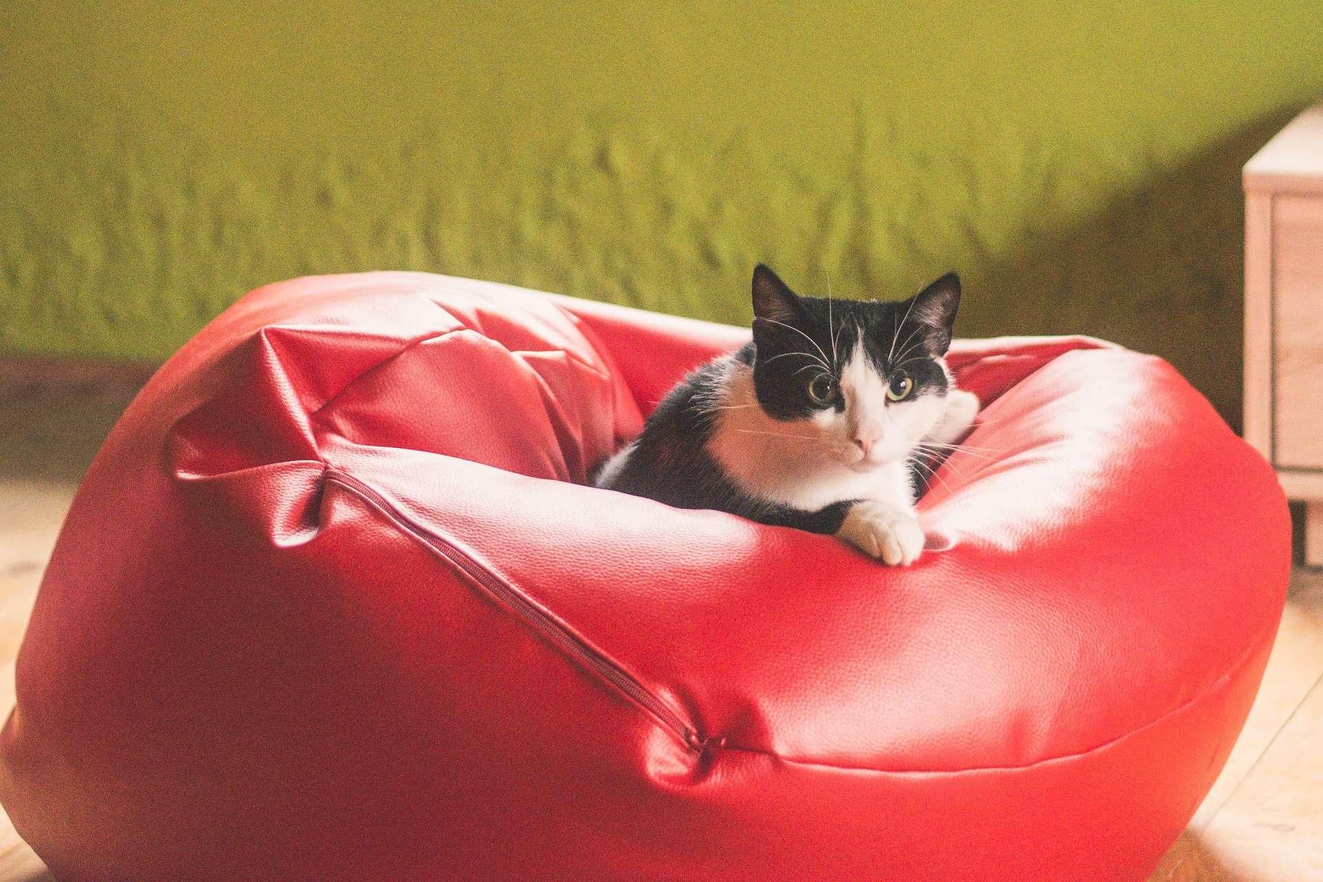 Imagem de gato preto e branco deitado em puff de couro vermelho.