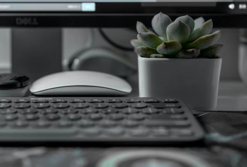 Imagem mostra um mini teclado preto ao lado de um vaso de suculentas.