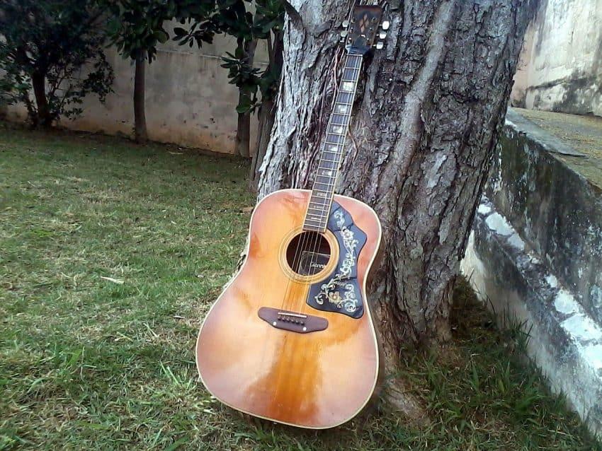Fotografia de um violão encostado em uma árvore.