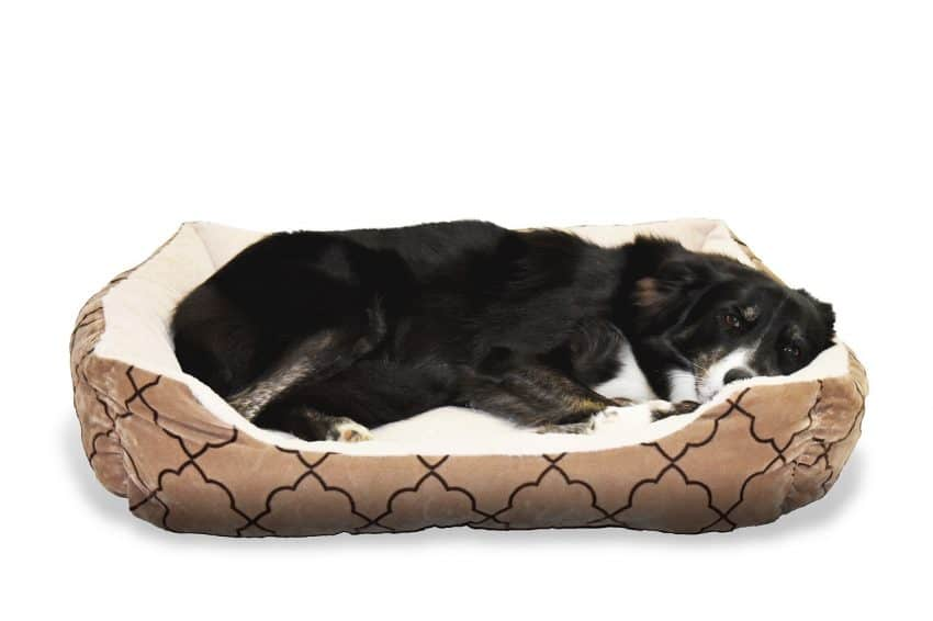Cachorro deitado em uma cama pet confortável.