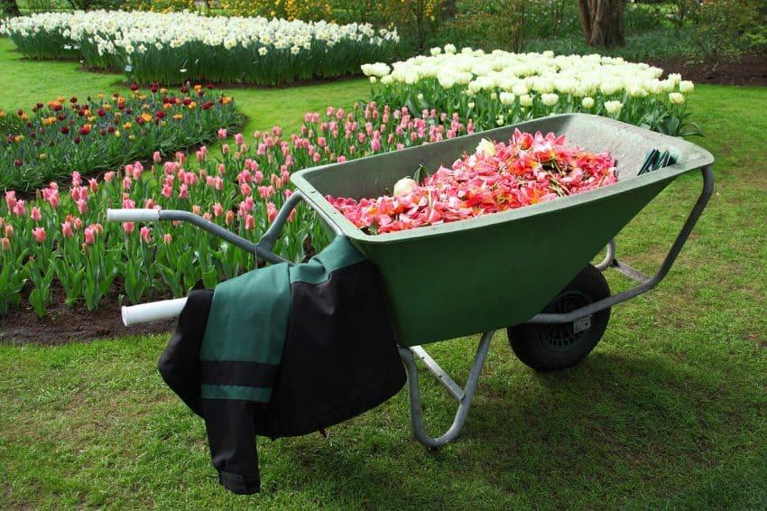 Carrinho de mão sendo utilizado para transportar flores.