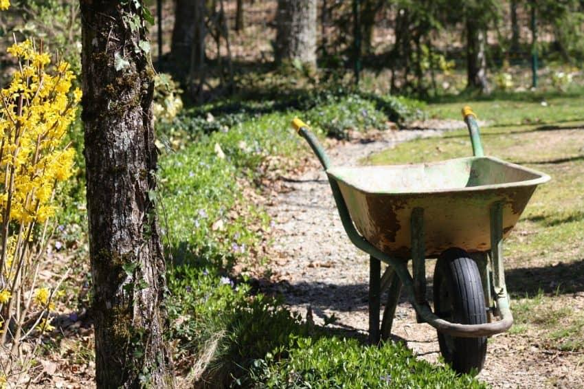 Carrinho de mão parado em um pequeno caminho ao lado de árvores, plantas e um pequeno gramado.