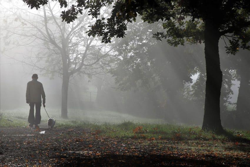 Imagem de pessoa passeando no parque com cachorro preso por uma guia.