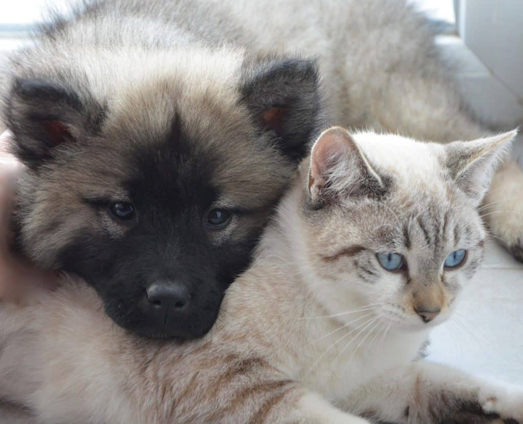Image of a dog supported by a cat.