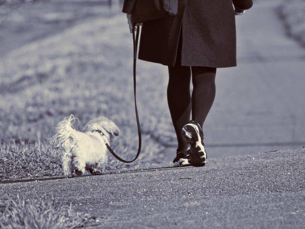 Imagem preto e branco de pessoa caminhando com cachorro preso por coleira com guia.