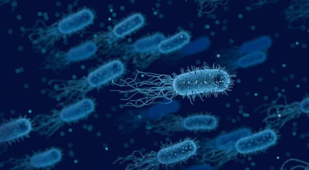 Imagem de bactérias num meio de cultura, observada por microscópio.