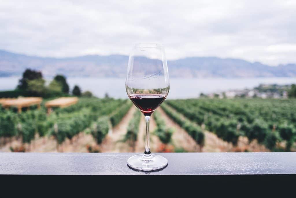 Taça de vinho em bancada em frente a uma plantação de uvas.