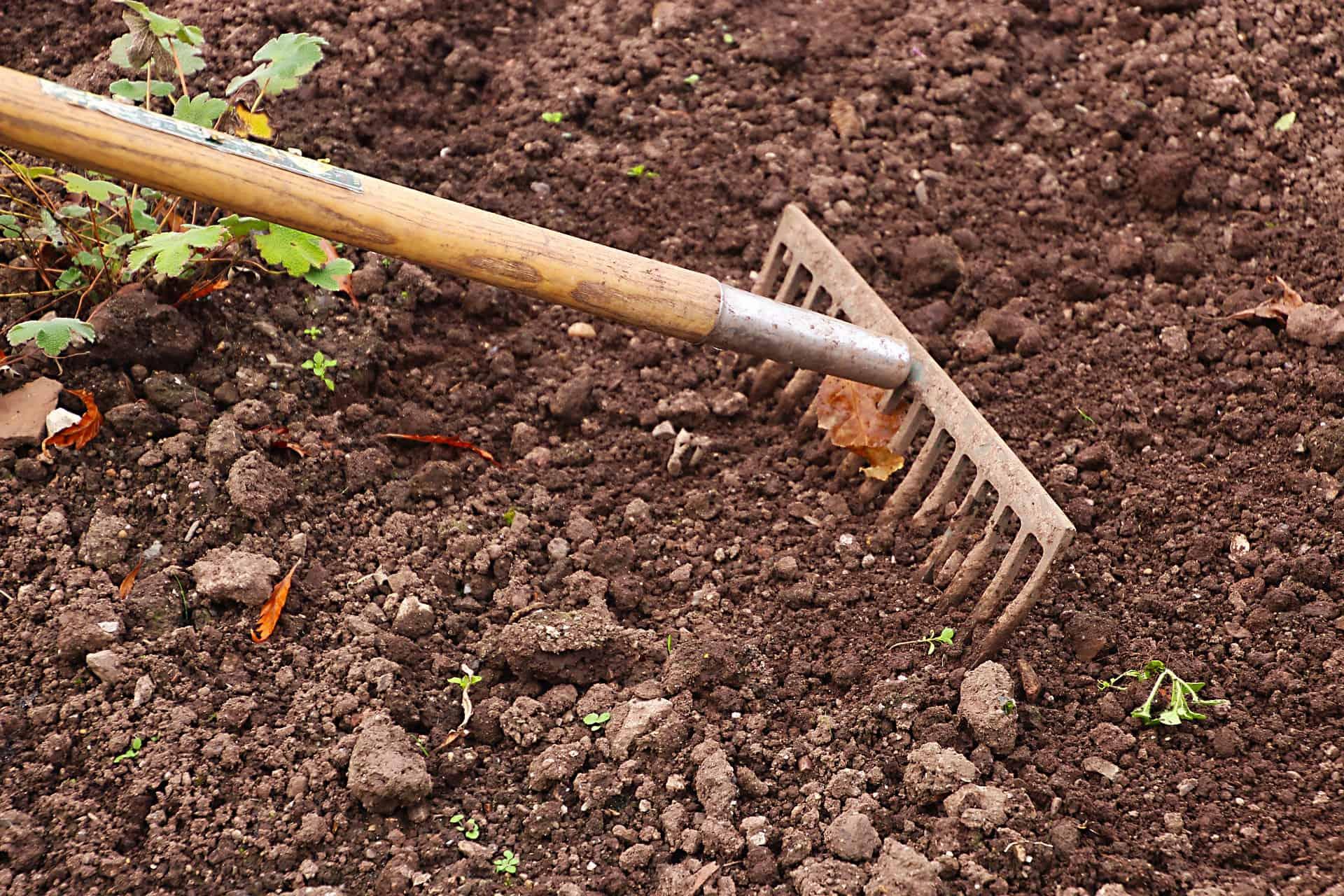 Imagem de um ancinho de grande porte com cabo de madeira preparando o solo para o plantio.