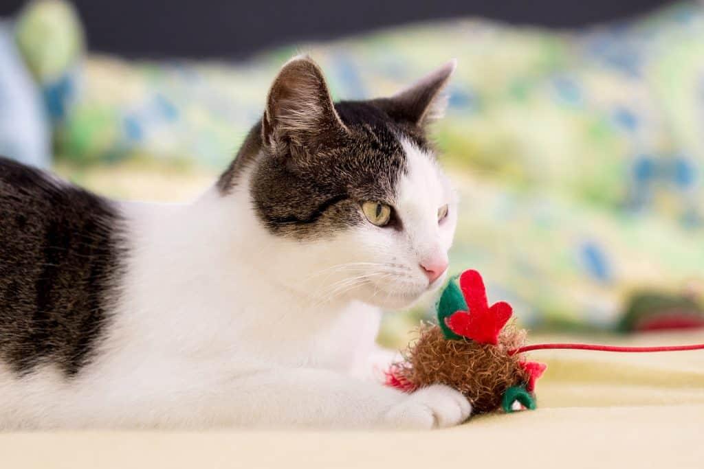Imagem de gato branco com brinquedo de corda vermelho e verde.