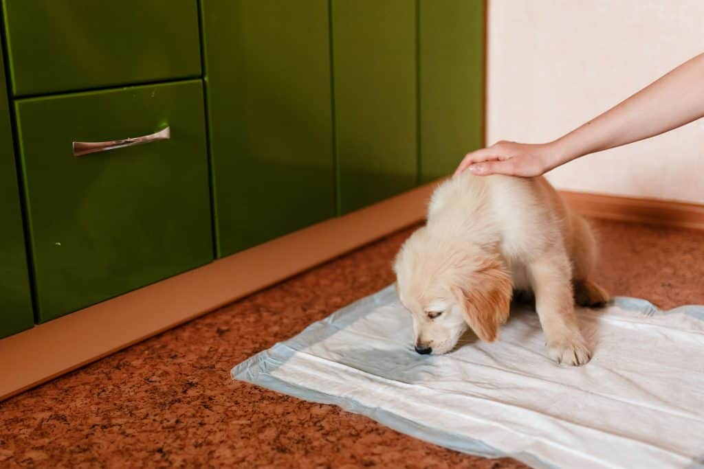 dog sniffing pee on toilet mat while owner caresses