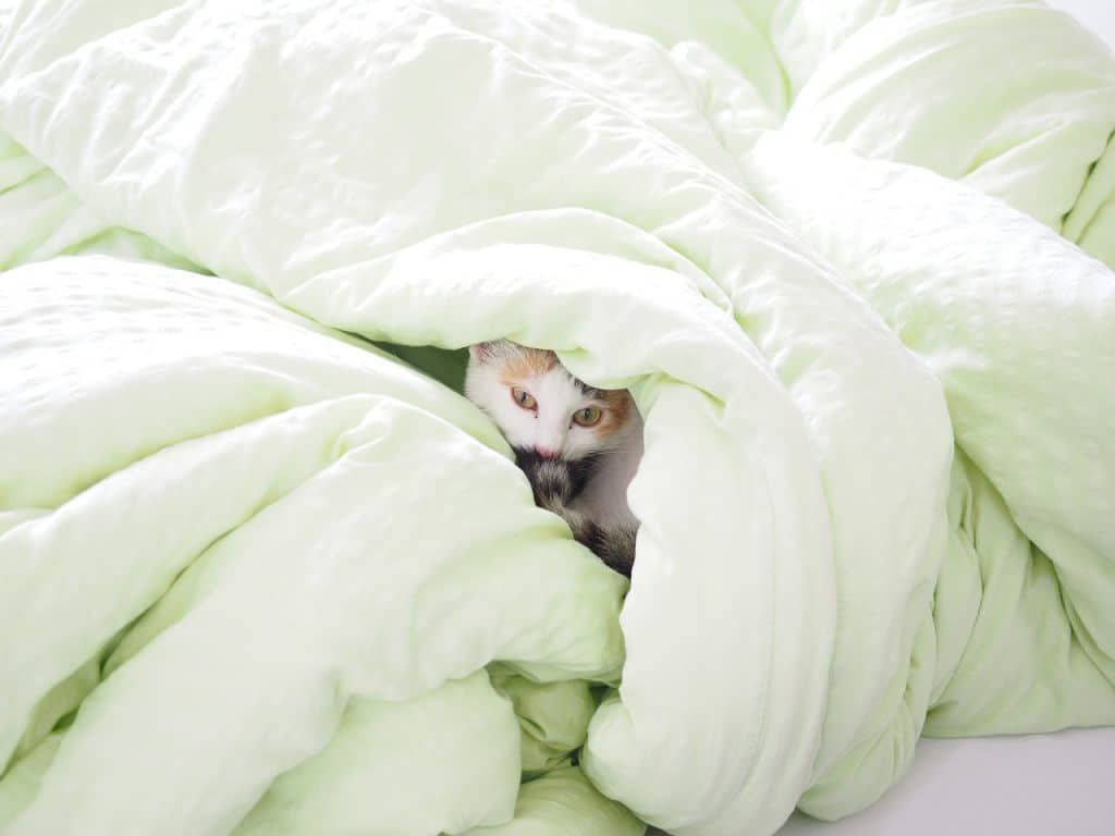 Imagem de um gato no meio de um edredom verde.