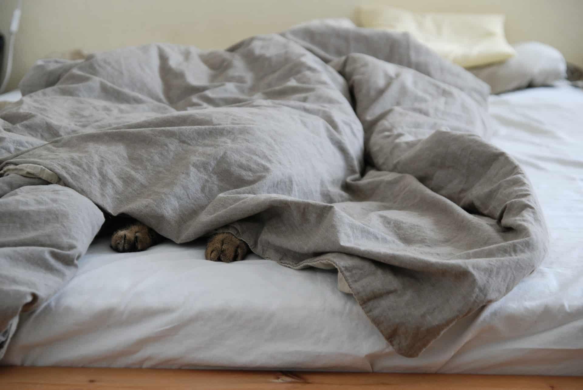 Imagem de animal deitado em uma cama com as patas surgindo debaixo de um edredom cinza.