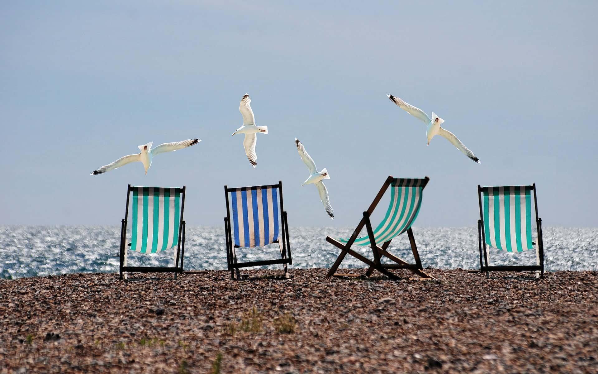 Imagem de espreguiçadeiras na praia, sendo sobrevoados por gaivotas.