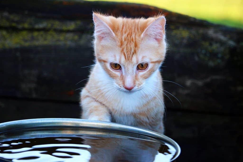Imagem de gato tomando água em um bebedouro metálico.