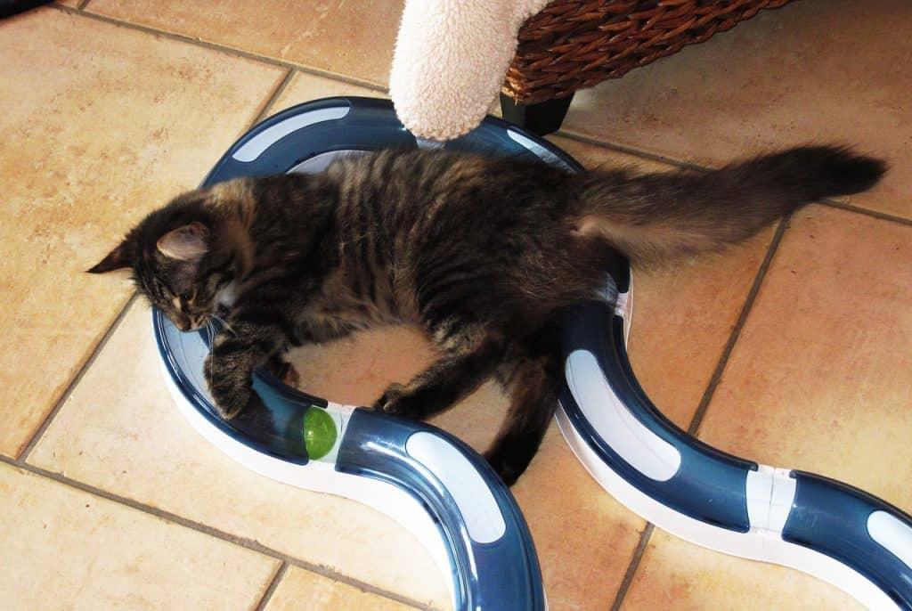 Imagem de gato com brinquedo interativo de túnel.