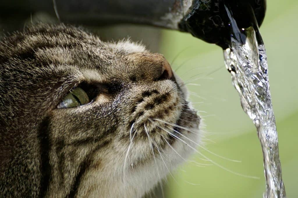 Imagem de gato tomando água em um bebedouro estilo fonte.