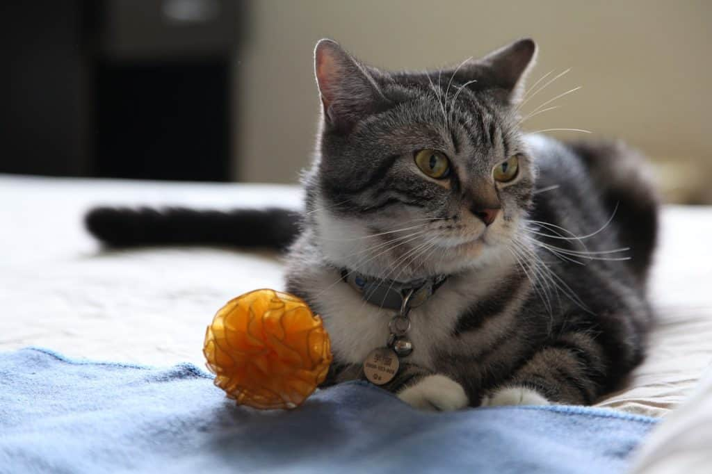 Imagem de gato com bolinha amarela.
