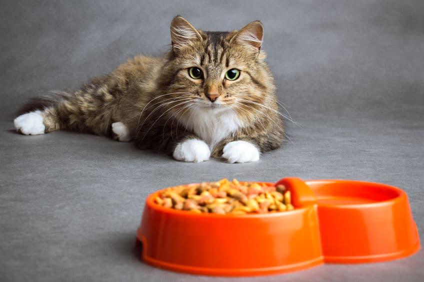Imagem de gato deitado na frente do pote de ração laranja.