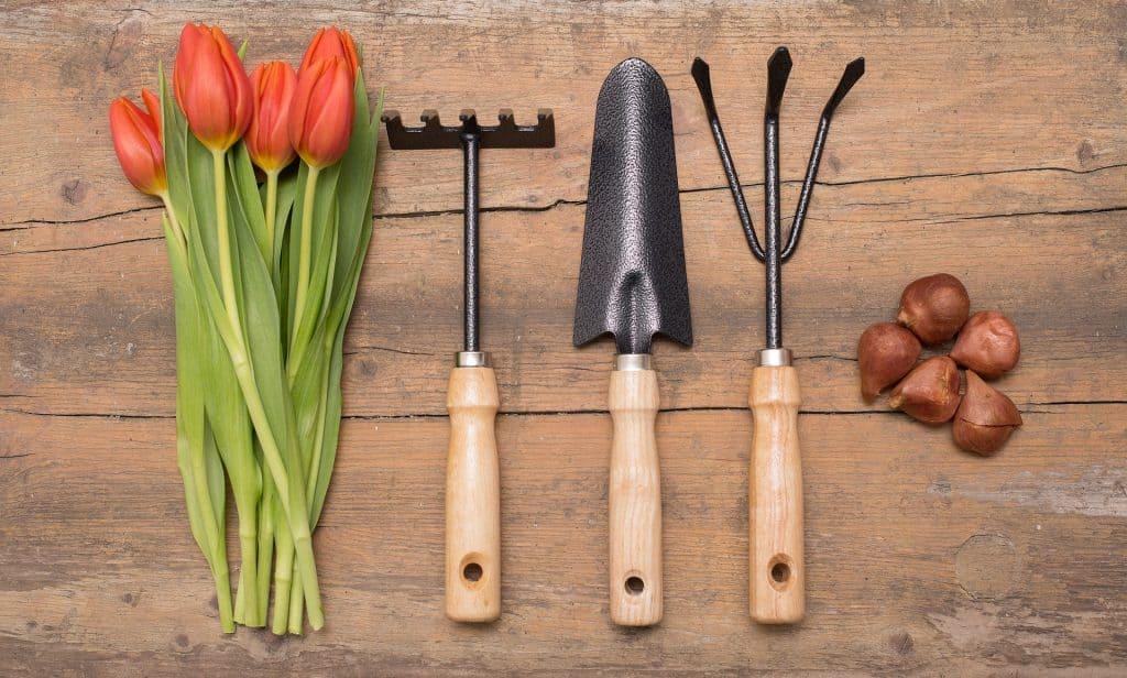 Imagem de três ferramentas de jardim ao lado de flores e sementes sobre uma tábua de madeira.