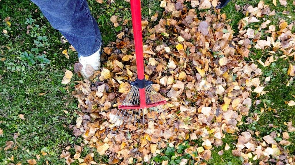 Imagem de uma pessoa segurando uma vassoura de jardim para coletar folhas secas do gramado.