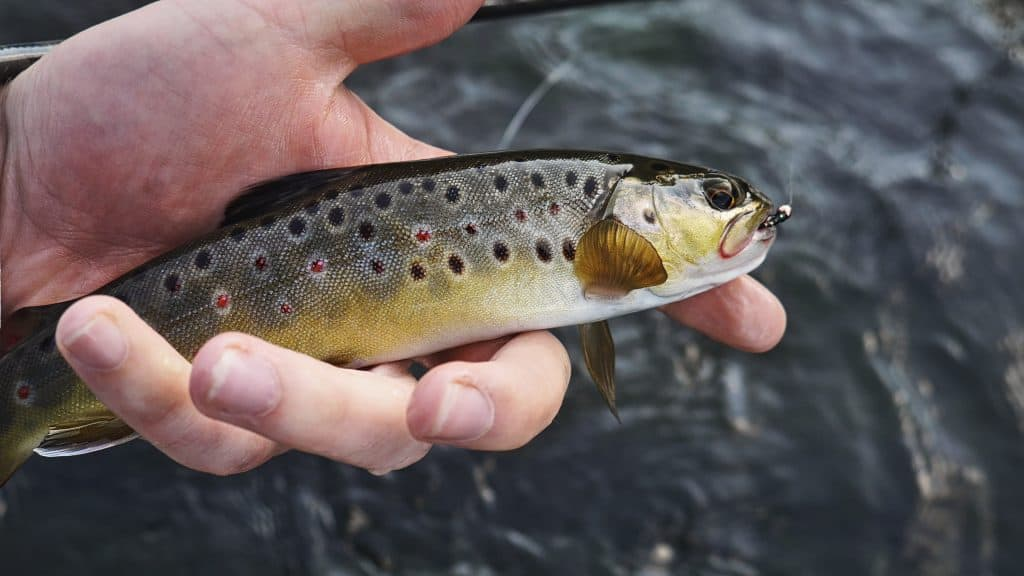 Imagem mostra uma pessoa segurando um peixe que tem um anzol em sua boca.
