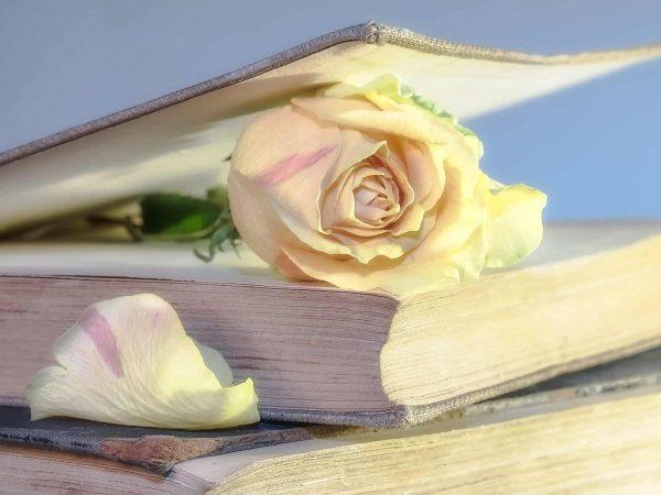 Imagem de livro de romance com uma rosa.