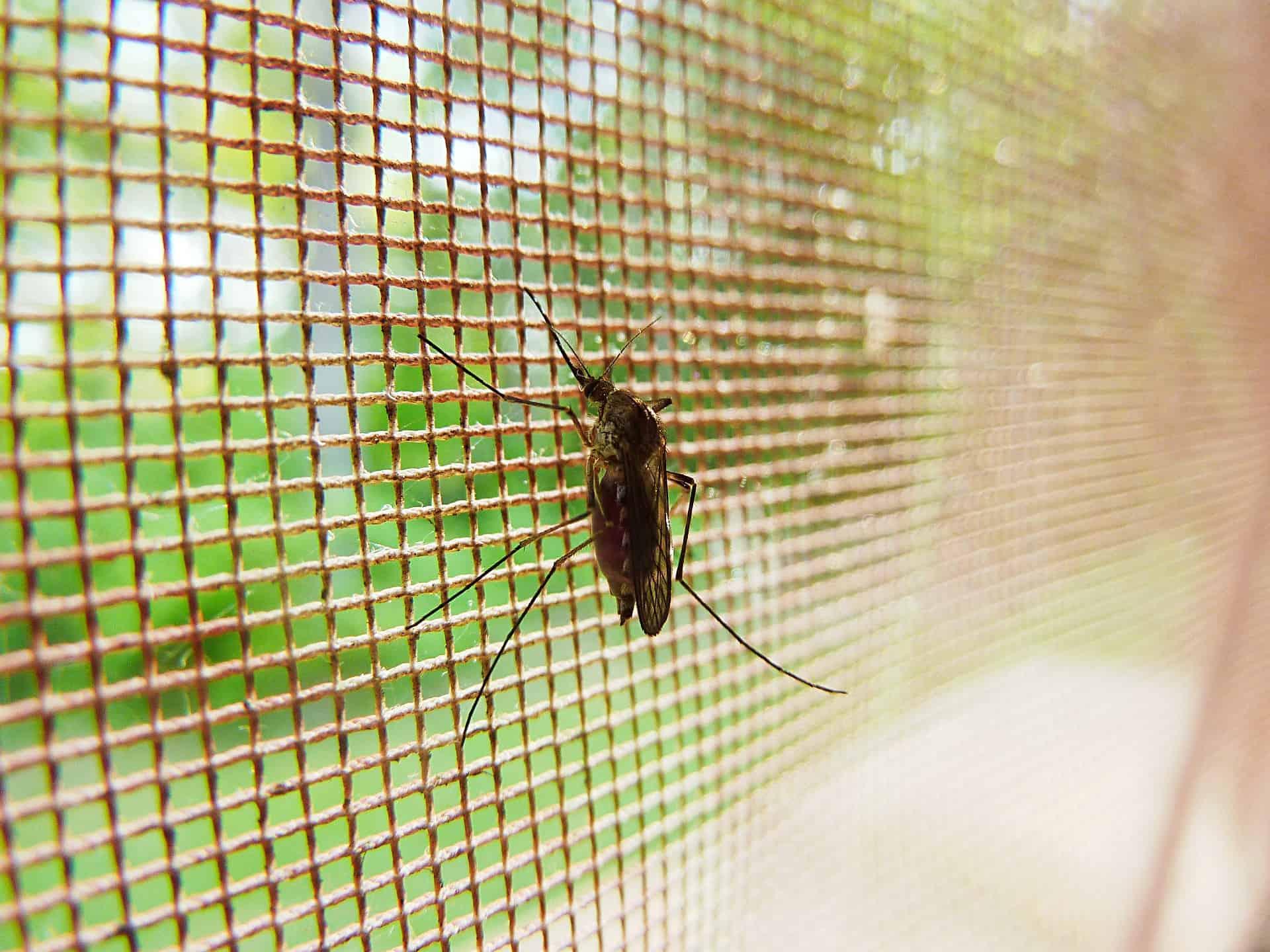 Imagem em close mostra inseto sobre tela mosquiteiro.