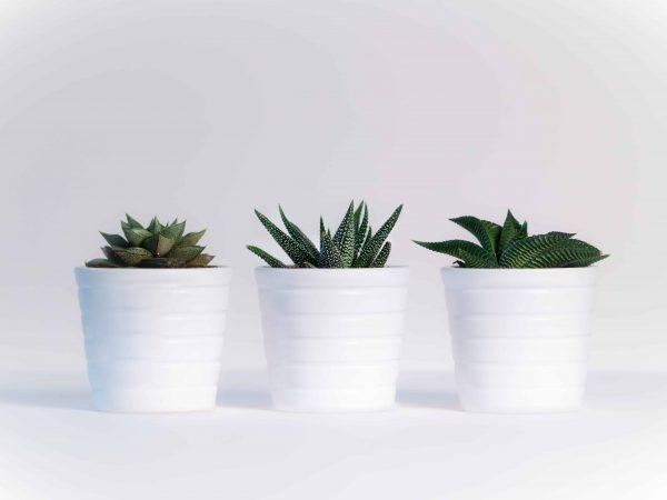 Imagem de trio de vasos autoirrigáveis brancos com compartimento oculto.