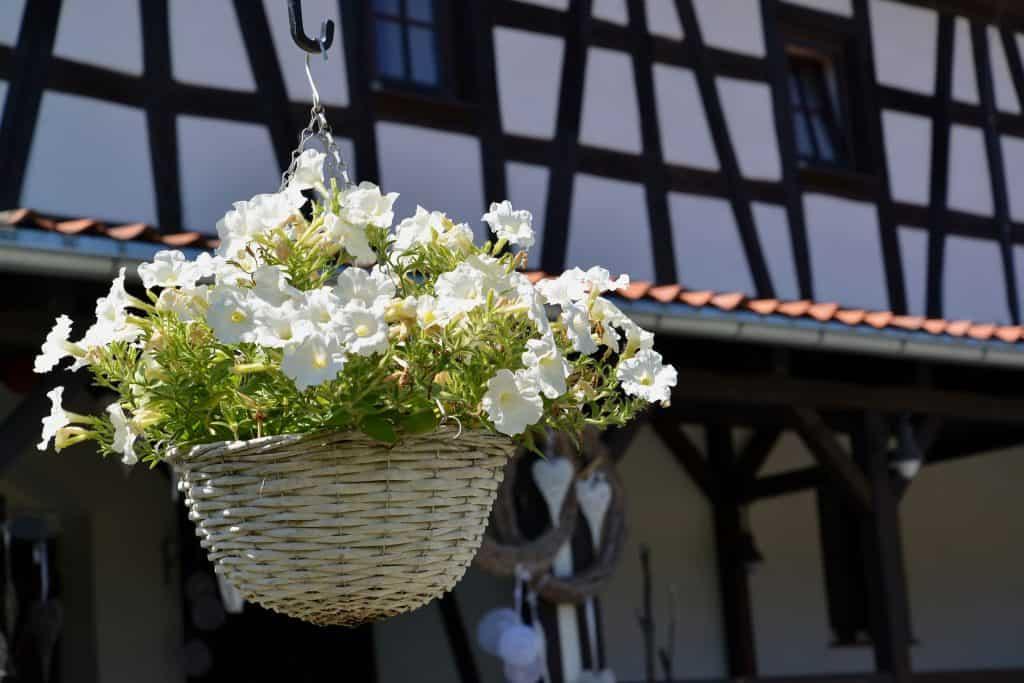 Na foto um vaso de flores brancas com cachepot suspenso.