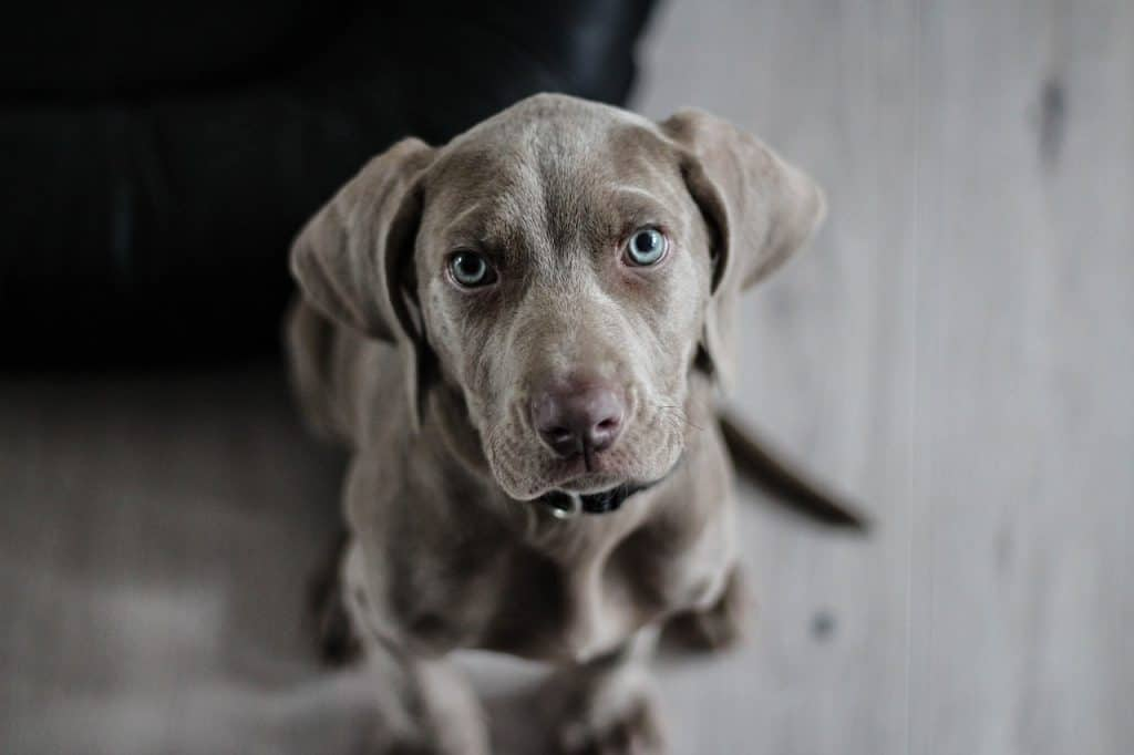 Image of a sitting dog looking up at the camera focus.