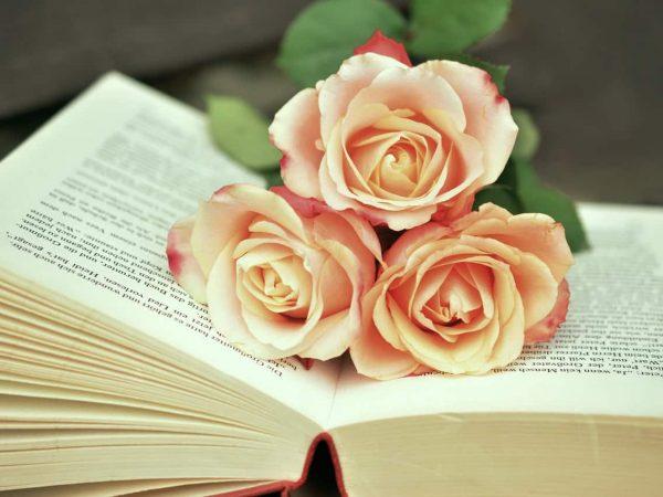 Imagem de um livro de romance.
