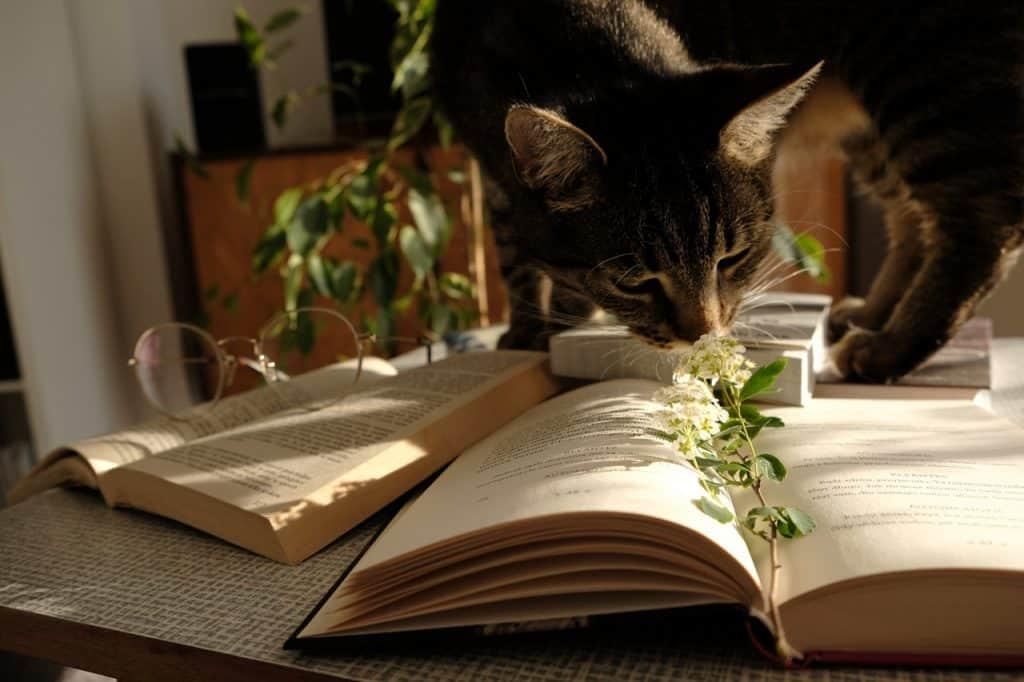 Imagem de uma mesa com livros e um gato.