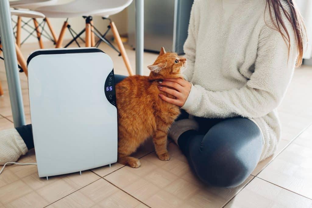 Imagem de uma pessoa fazendo carinho em um gato.
