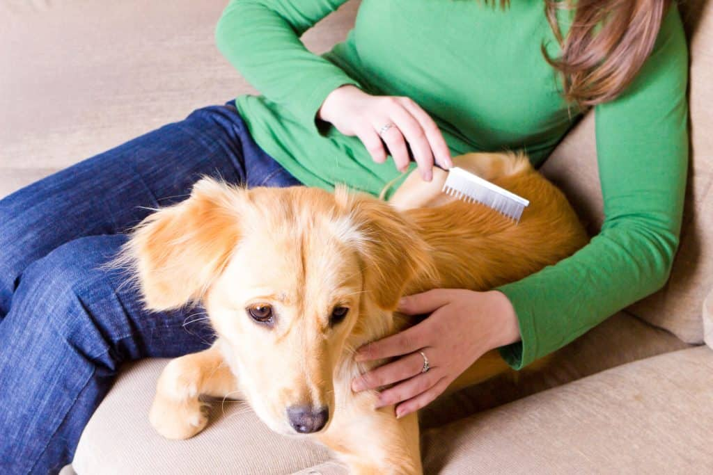 Image of a woman combing a dog.