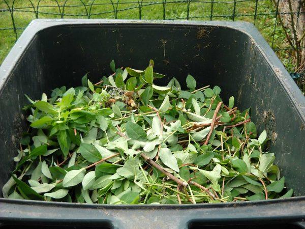 Imagem de composteira doméstica de plástico com restos de folhagens