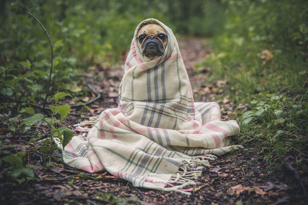 Imagem de cachorro enrolado em manta térmica de tecido