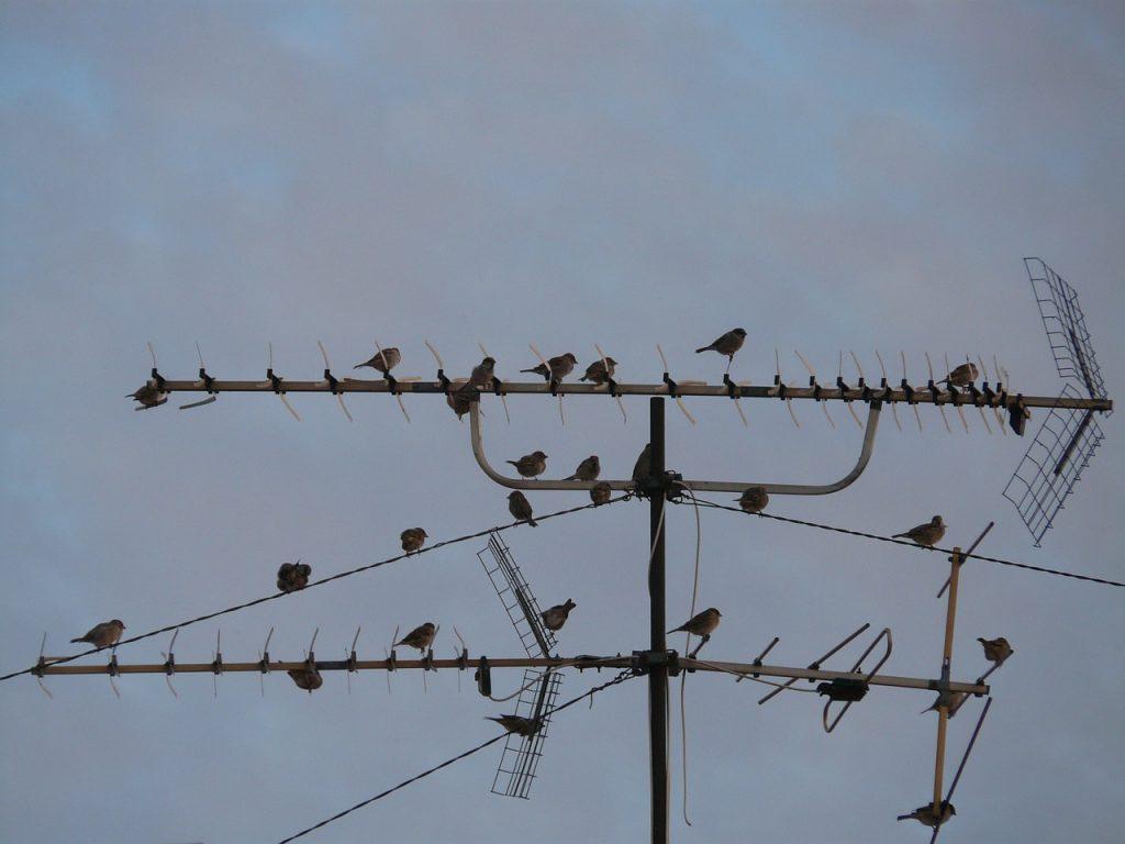Imagem com antenas instaladas, repletas de passarinhos pousados.
