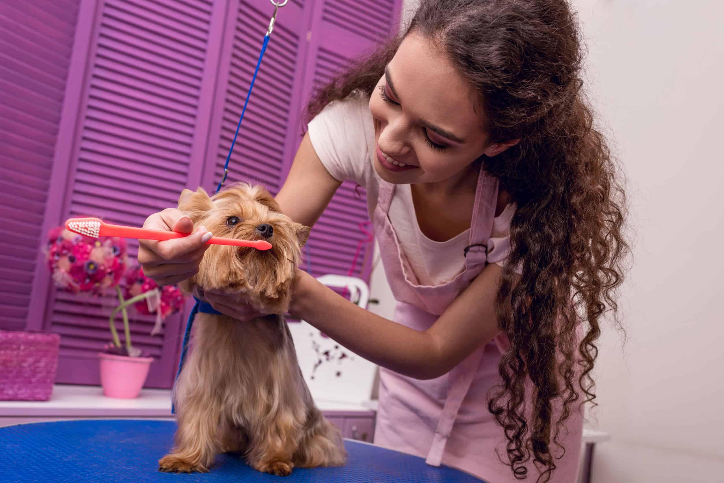 Escova de dentes para cachorro: Qual o melhor modelo em 2020