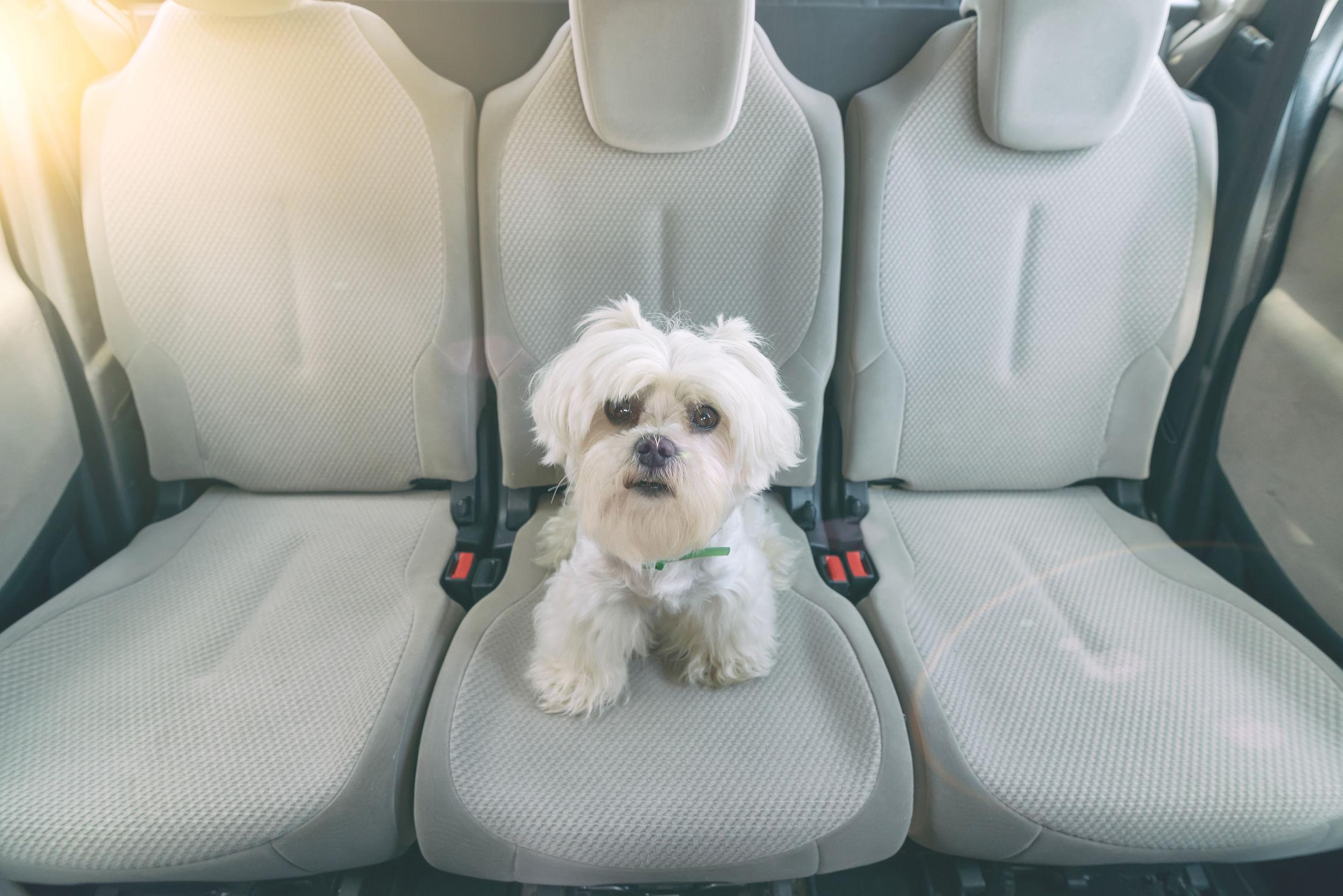 cachorro sentado em uma capa para banco de carro